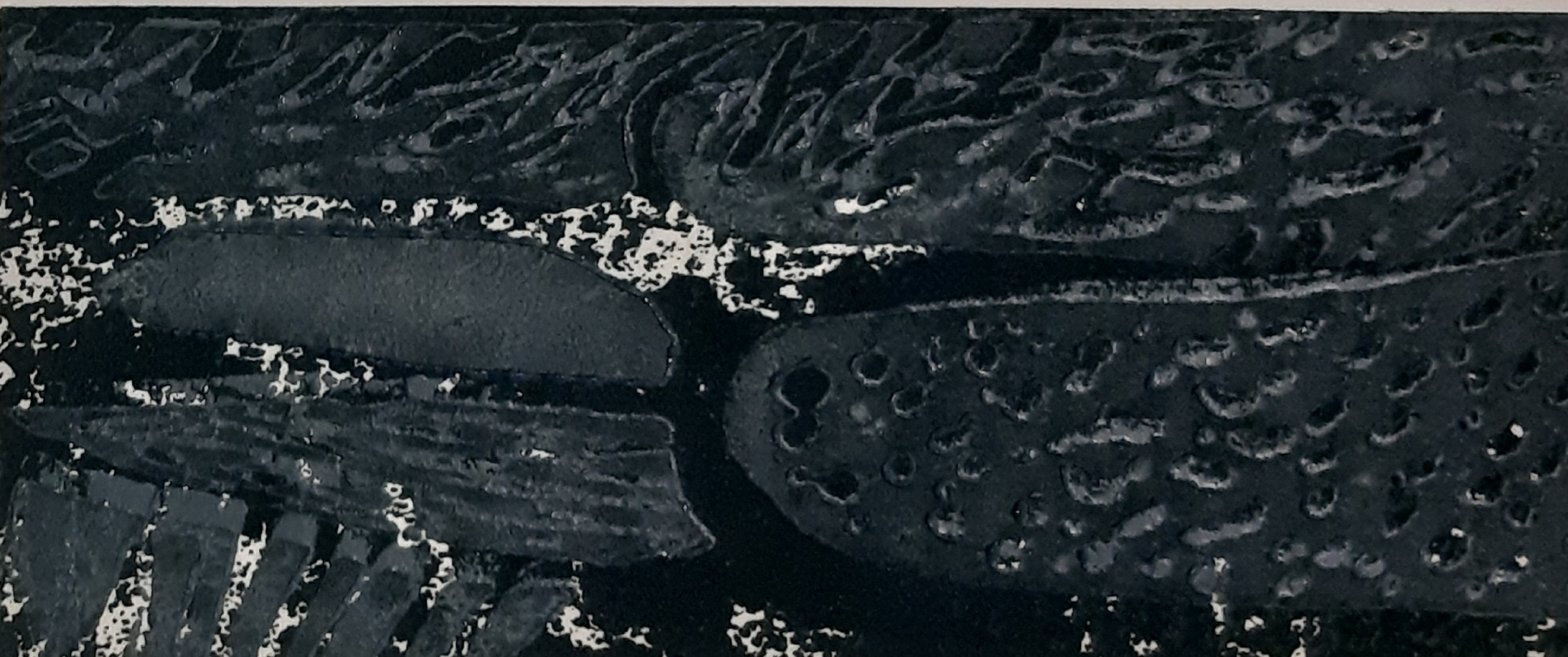 Detail onderwaterwereld
